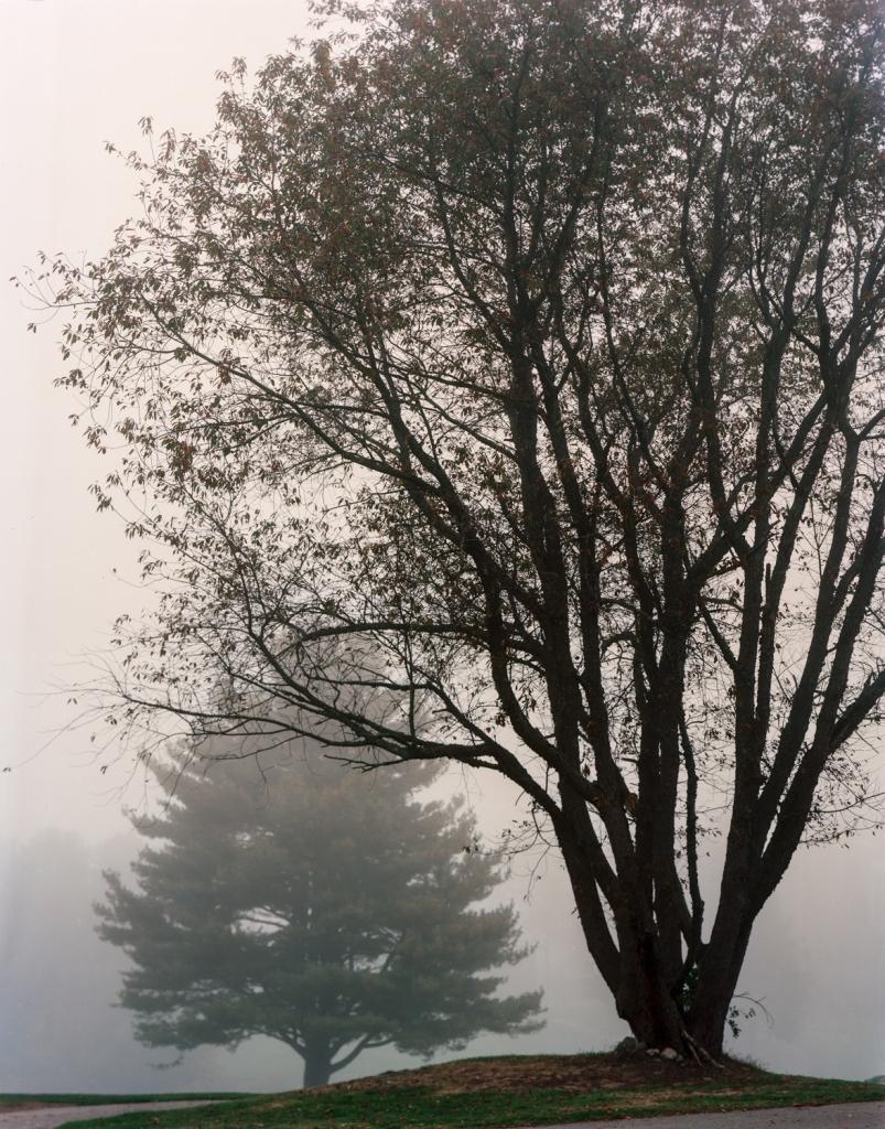 golf course fog2